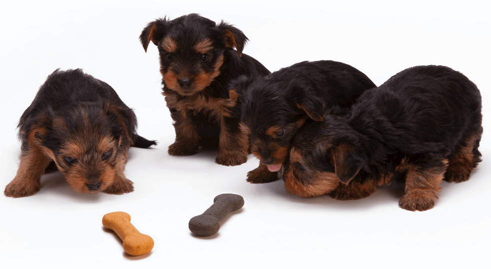 Ways to Buy the Best Treats for Your Dog