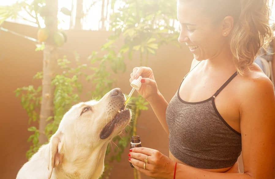 What to Look for In CBD Oil for Dogs