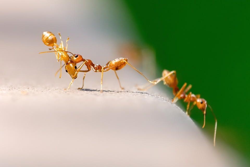 Major Signs of Pest Infestation