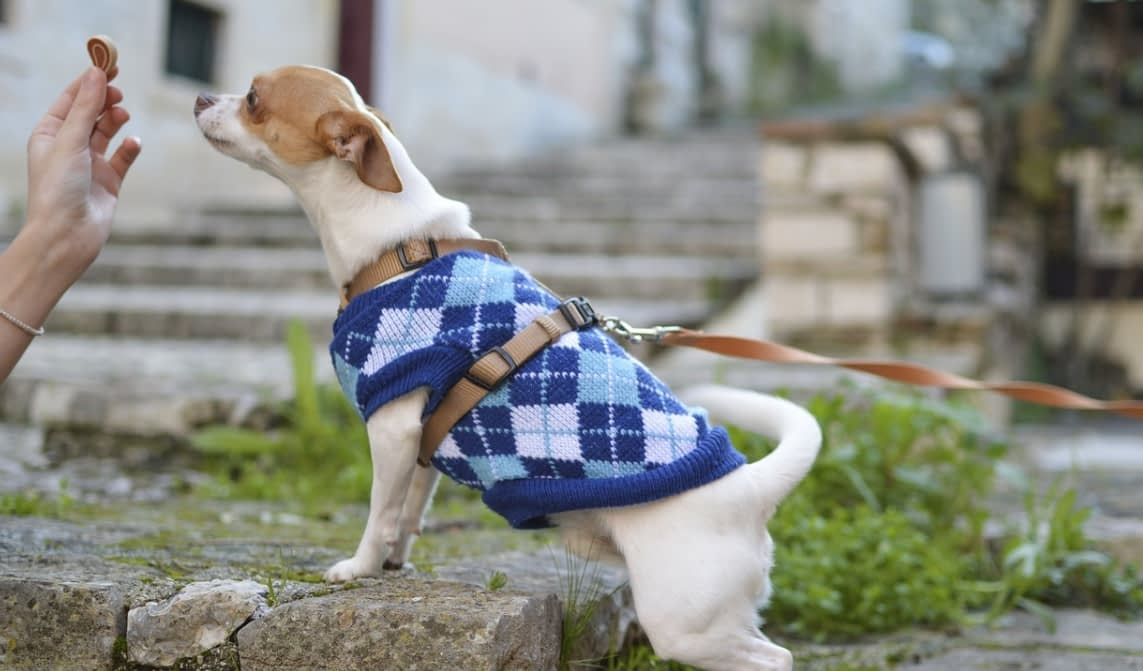What to Look for When Buying Dog Clothing